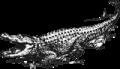 Krokodilspruit Wapens